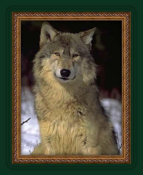 Les loups Kuem7nhe