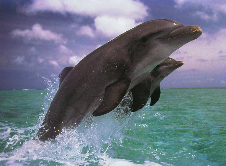 Les dauphins et les orques R08f92qv