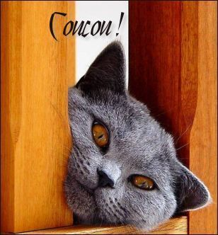 chat amical gratuit Nancy